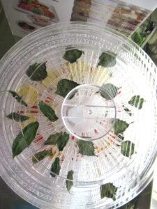 ドライ野菜の作成